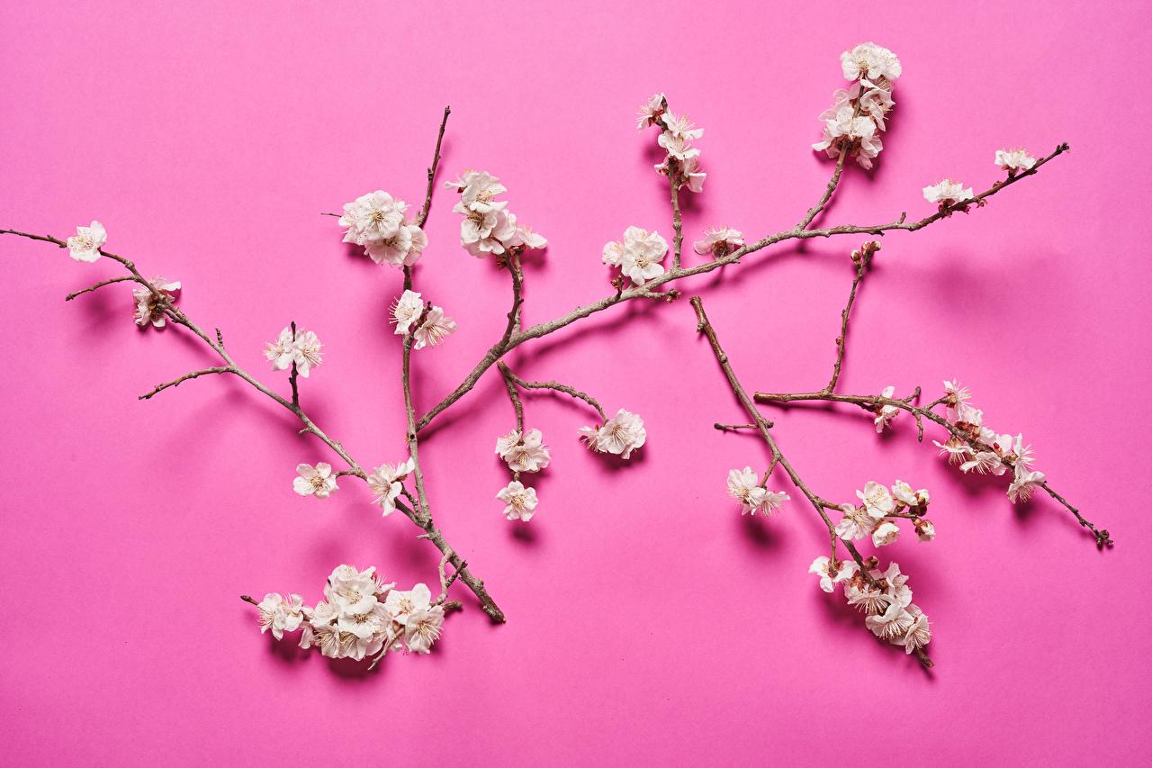 Обои для рабочего стола Природа на ветке Цветущие деревья Цветной фон ветвь ветка Ветки