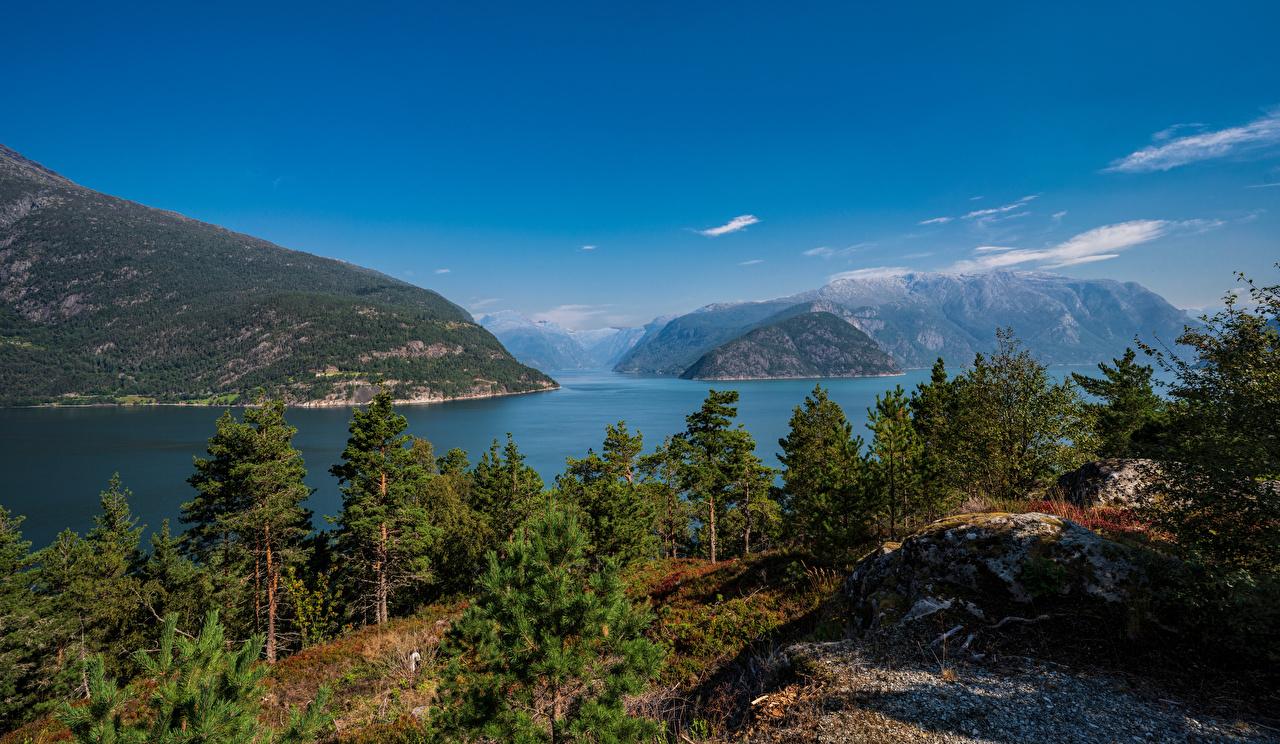 Фотография Норвегия Hardangerfjorden гора Природа Деревья Горы дерево дерева деревьев