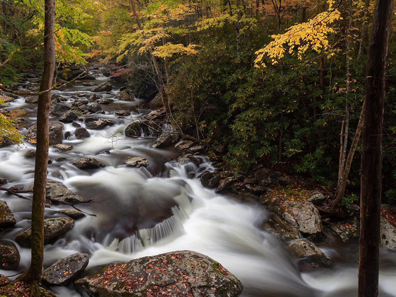 Картинка США Great Smoky Mountain National Park Природа осенние Леса Парки речка Камень штаты Осень Реки Камни