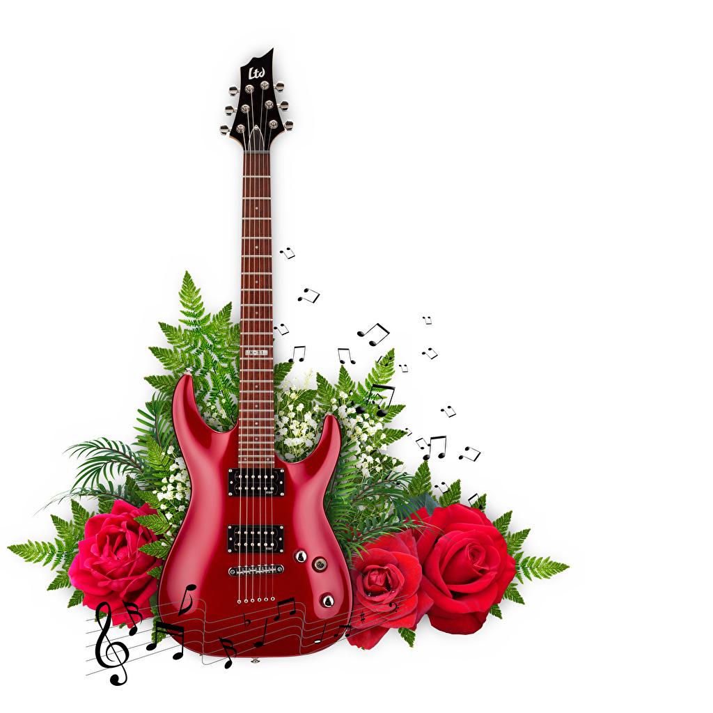 Фотография Ноты с гитарой Розы Ветки белым фоном гитары Гитара роза ветвь ветка на ветке Белый фон белом фоне