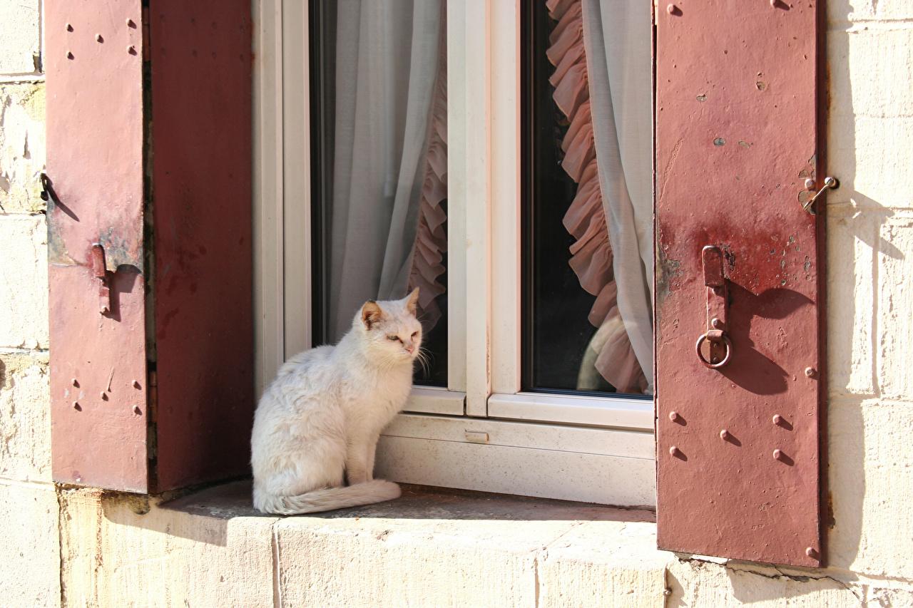 Фотография Кошки Окно Сидит Животные Коты сидящие