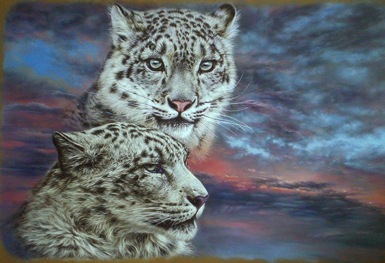 Фото Ирбис Большие кошки Sergei Kuzmin Живопись Голова Барсы картина головы