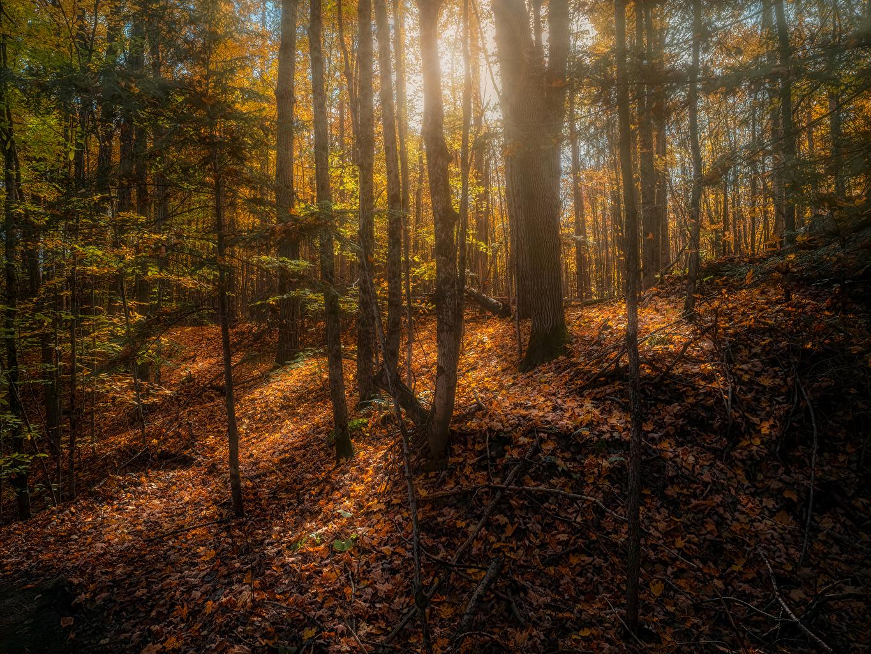 Обои для рабочего стола Канада Листья Copeland forest near Barrie осенние Природа лес деревьев лист Листва Осень Леса дерево дерева Деревья
