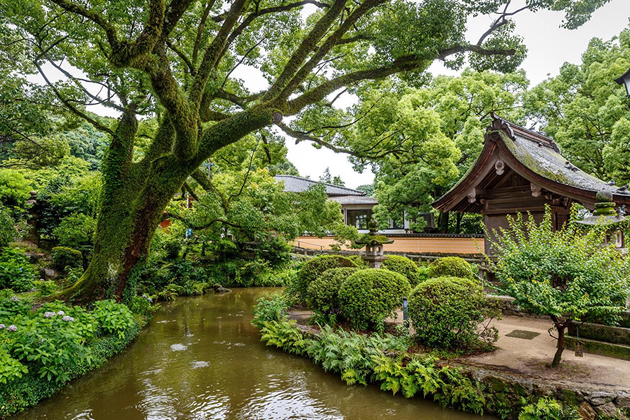 Фото Сингапур Природа Пруд парк кустов деревьев Парки Кусты дерева дерево Деревья