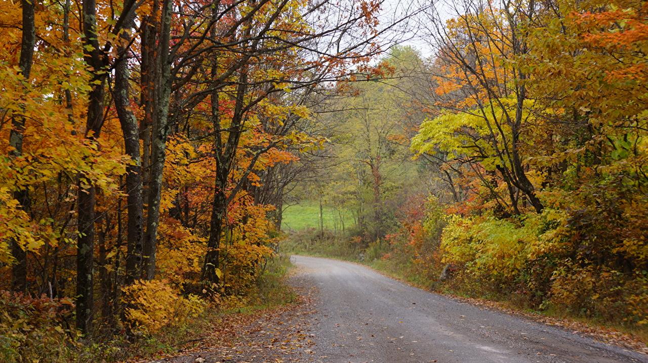 Фотографии штаты Nelson County, Virginia Природа осенние Леса Дороги дерево США Осень дерева Деревья деревьев