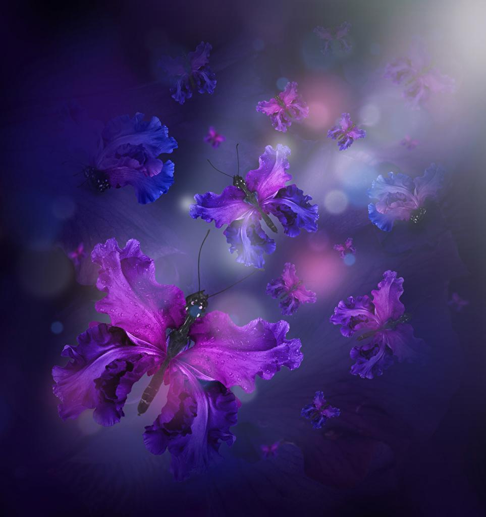 Фотографии Бабочки ирис цветок дизайна бабочка Цветы Ирисы Дизайн