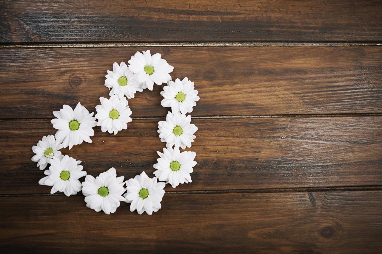 Фотография Сердце Цветы ромашка Шаблон поздравительной открытки Доски серце сердца сердечко цветок Ромашки