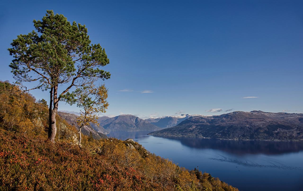 Картинка Норвегия Hardangerfjorden осенние Природа дерево Осень дерева Деревья деревьев