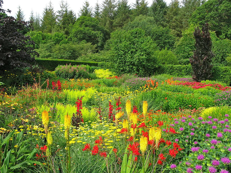 Фотографии Великобритания Rosemoor Gardens Природа Сады кустов деревьев Кусты дерева дерево Деревья