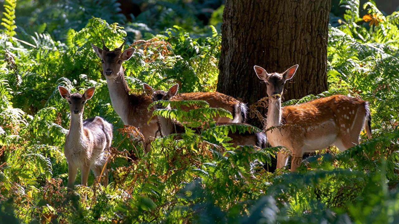 Фотография Олени Четыре 4 животное Животные