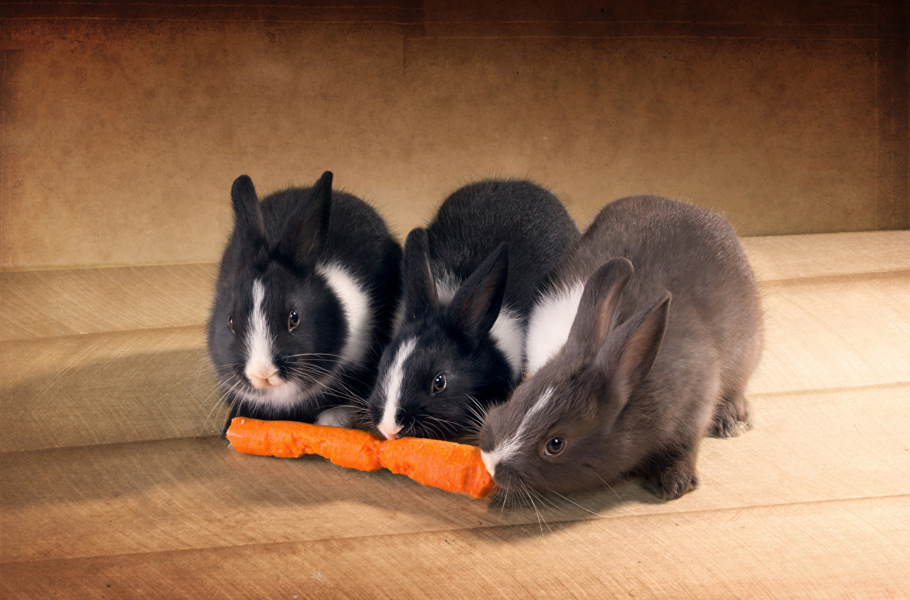 Фотографии Кролики Морковь втроем животное кролик три Трое 3 Животные