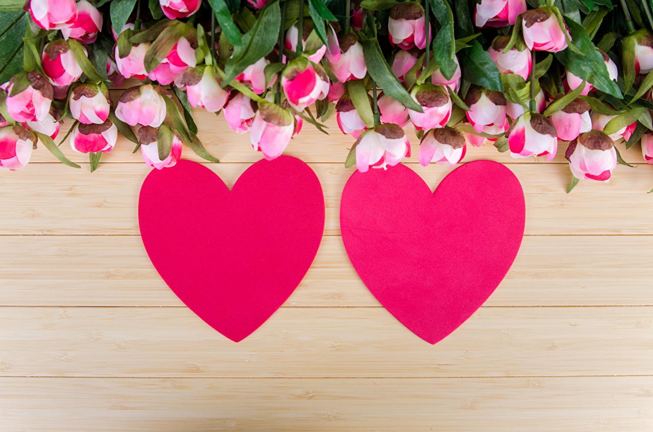 Фото День святого Валентина Сердце Двое Розы цветок Доски День всех влюблённых серце сердца сердечко 2 две два роза вдвоем Цветы