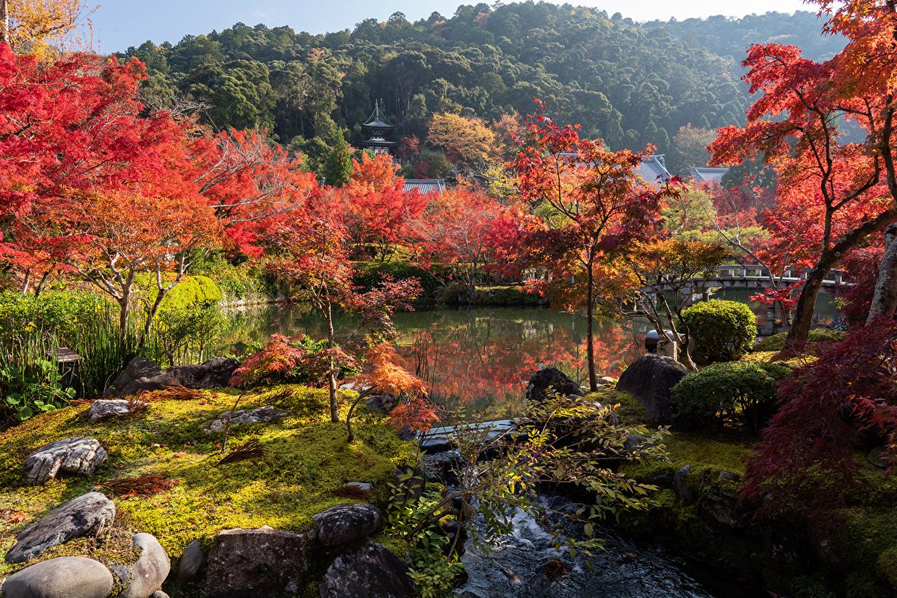 Фото Киото Япония Природа Парки река дерева парк Реки речка дерево Деревья деревьев