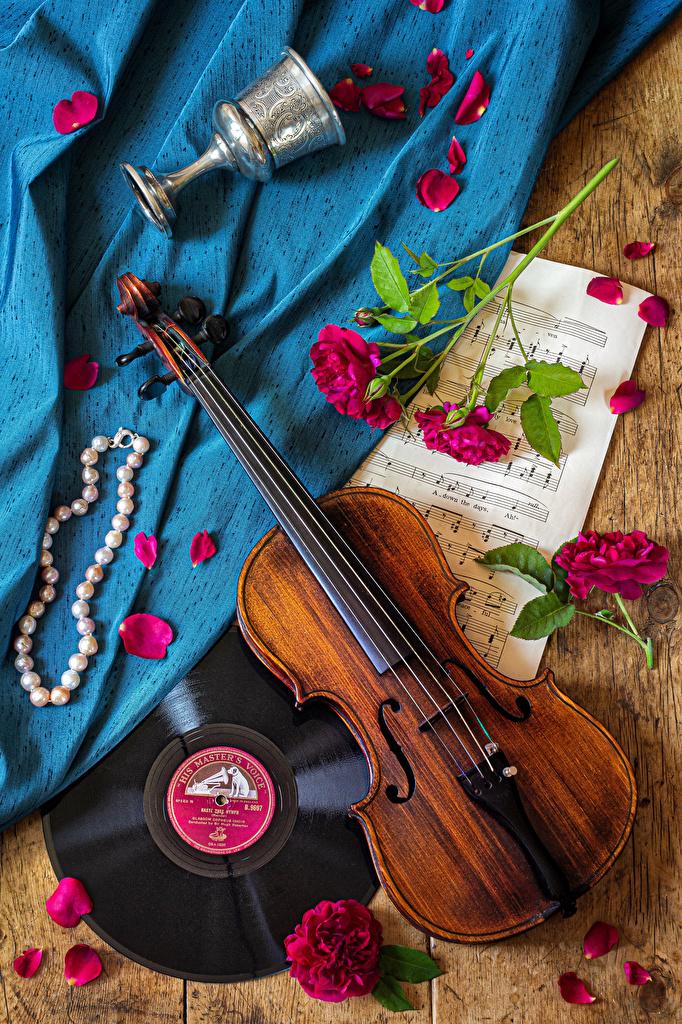 Картинка Скрипки Ноты Розы Лепестки цветок Бокалы Натюрморт Украшения  для мобильного телефона скрипка роза лепестков Цветы бокал
