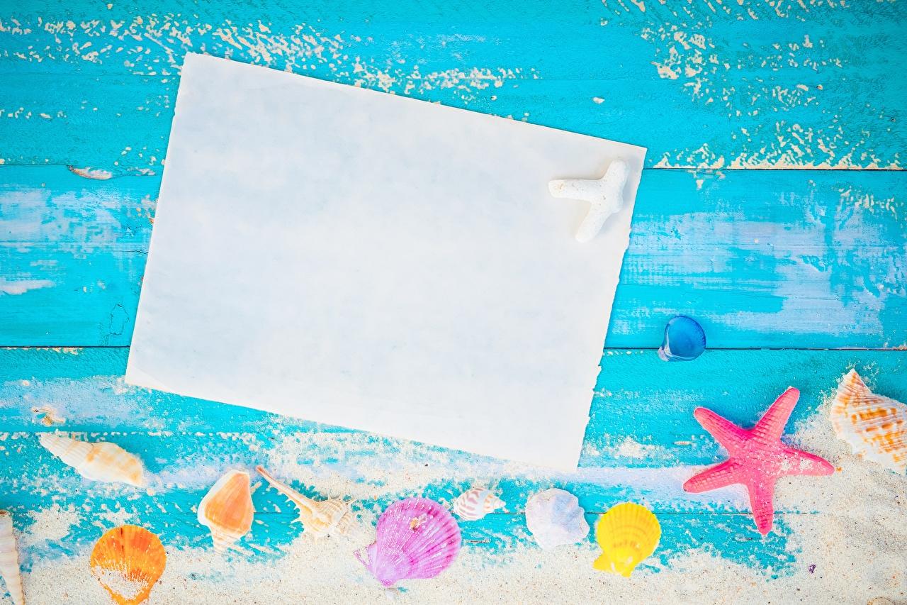 Фотография Лист бумаги Лето Ракушки Шаблон поздравительной открытки