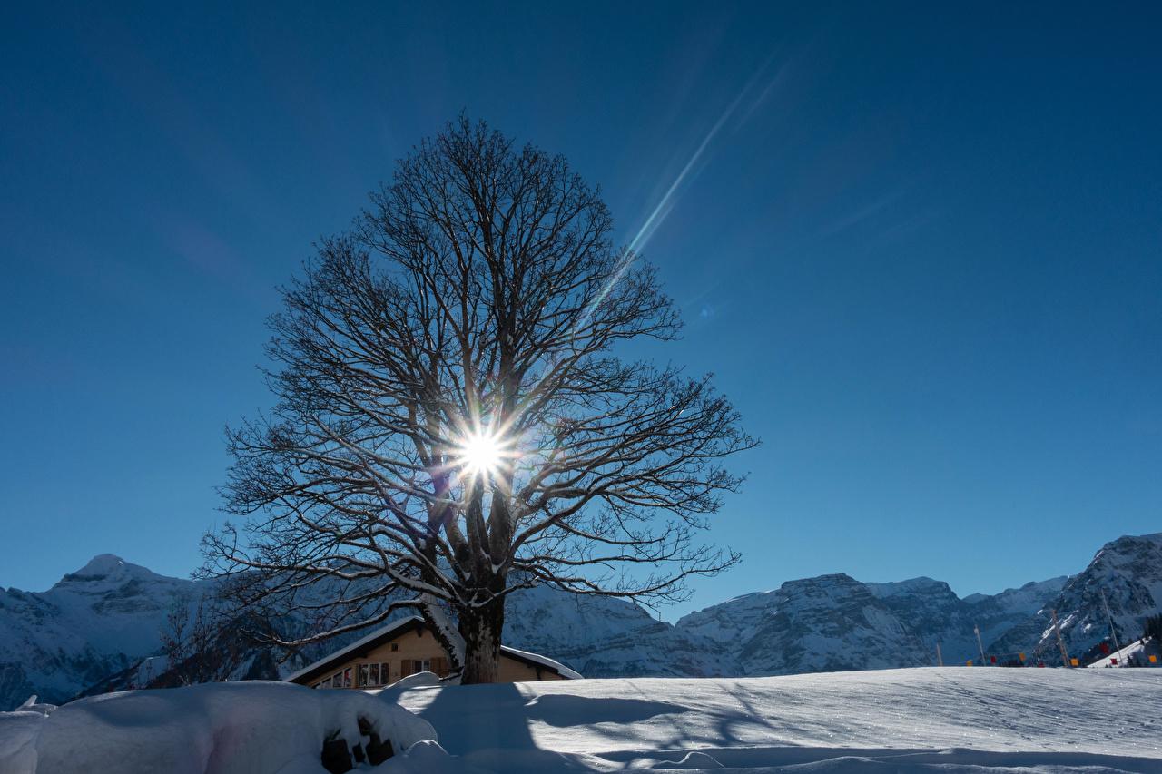 Обои для рабочего стола Лучи света Швейцария Braunwald гора зимние Природа снега деревьев Горы Зима Снег снеге снегу дерево дерева Деревья