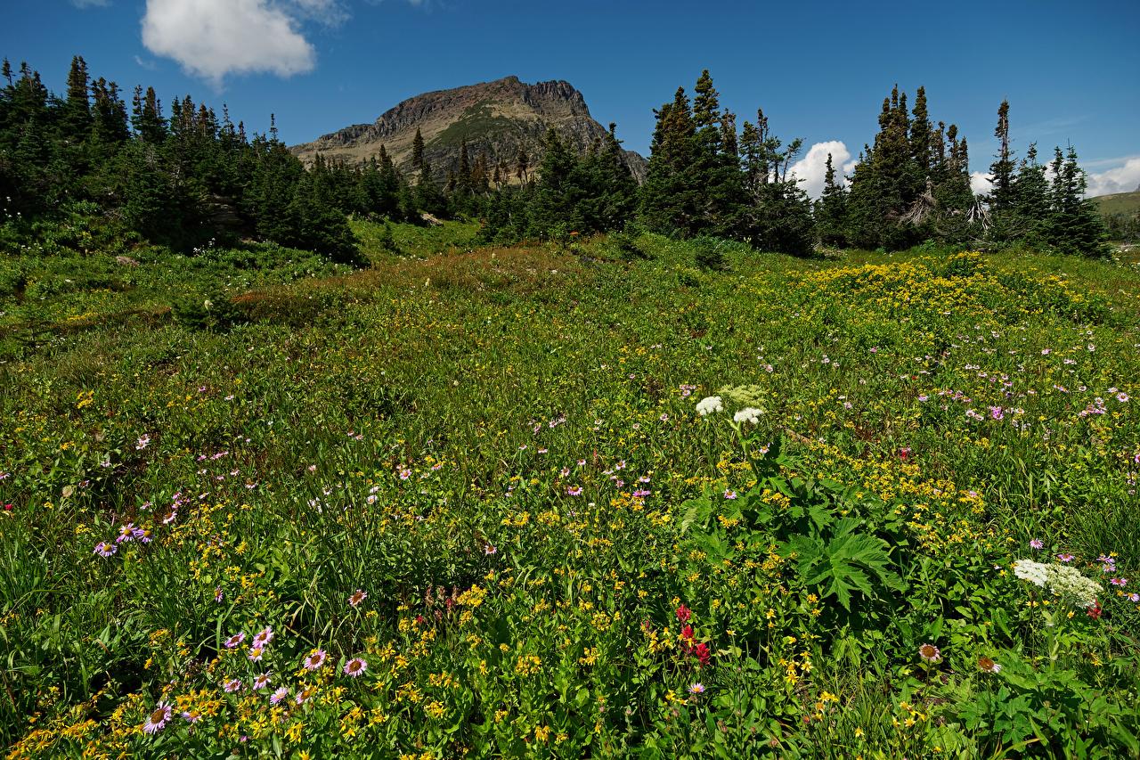 Фото америка Glacier National Park ели скале Природа парк Луга США штаты Ель Утес Скала скалы Парки