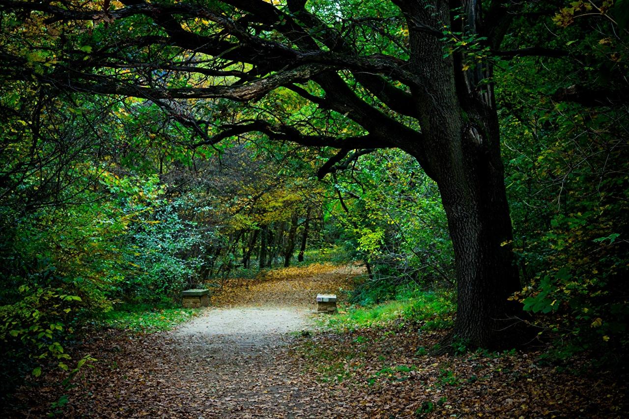 Фото Листва Осень Природа тропинка Парки Скамья дерево лист Листья тропы Тропа осенние парк Скамейка дерева Деревья деревьев