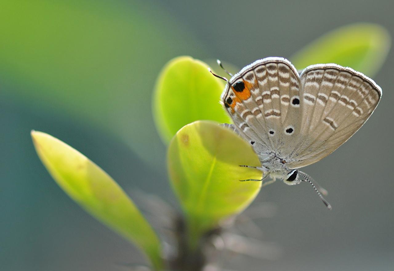 Фотография бабочка насекомое Листья Животные Крупным планом Бабочки Насекомые лист Листва вблизи животное