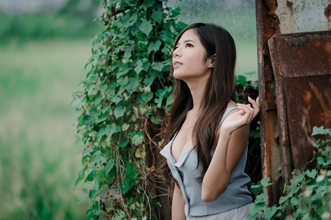 Фотографии шатенки позирует волос девушка азиатка Шатенка Поза Волосы Девушки молодые женщины молодая женщина Азиаты азиатки