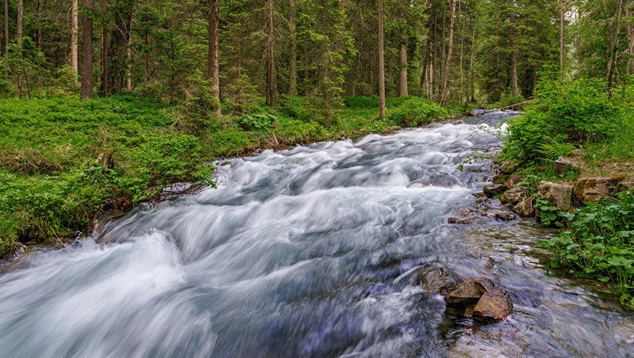 Фото Италия Rio Anterselva Ручей Природа Камни деревьев ручеек Камень дерево дерева Деревья