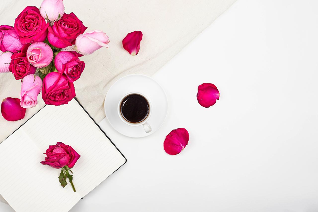 Фото роза Кофе лепестков цветок Еда чашке Шаблон поздравительной открытки белом фоне Розы Лепестки Цветы Пища Чашка Продукты питания Белый фон белым фоном