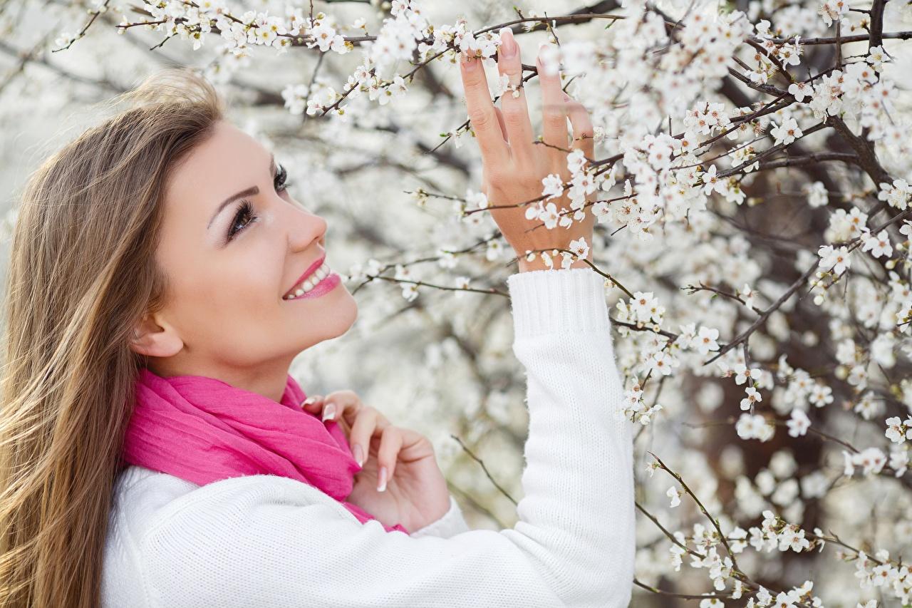 Фотографии Шатенка Шарф улыбается Весна молодая женщина свитера рука Цветущие деревья шатенки шарфе шарфом Улыбка Девушки девушка весенние молодые женщины Свитер свитере Руки