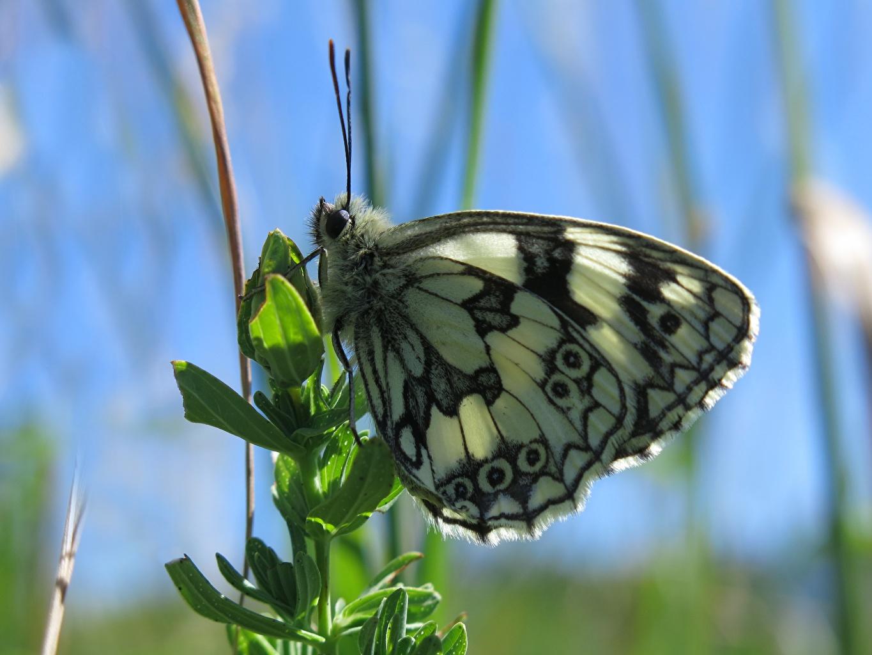 Фото Бабочки Насекомые боке Животные Крупным планом бабочка насекомое Размытый фон вблизи животное