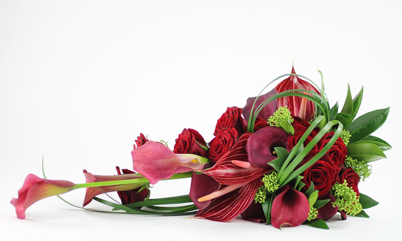 Фотография Букеты Розы Каллы Цветы Антуриум Белый фон Белокрыльник