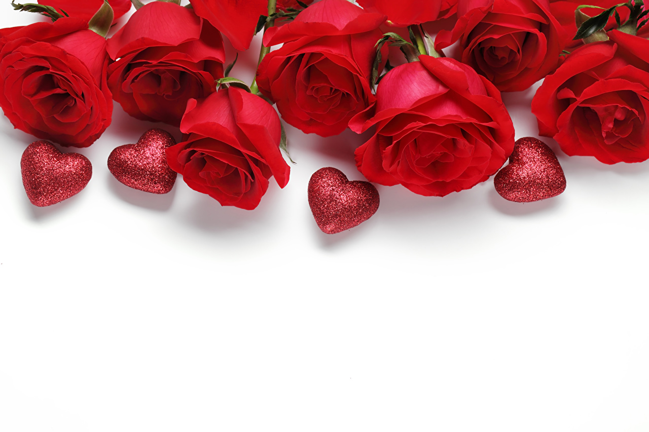 Картинки День святого Валентина серце Розы красные Цветы белом фоне День всех влюблённых Сердце сердца сердечко красных Красный красная Белый фон белым фоном