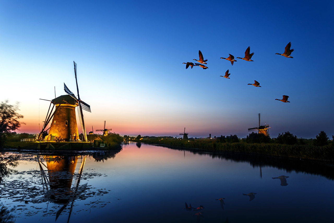 Фотографии Утки птица Мельница Природа Реки Вечер Птицы мельницы ветряная мельница река речка