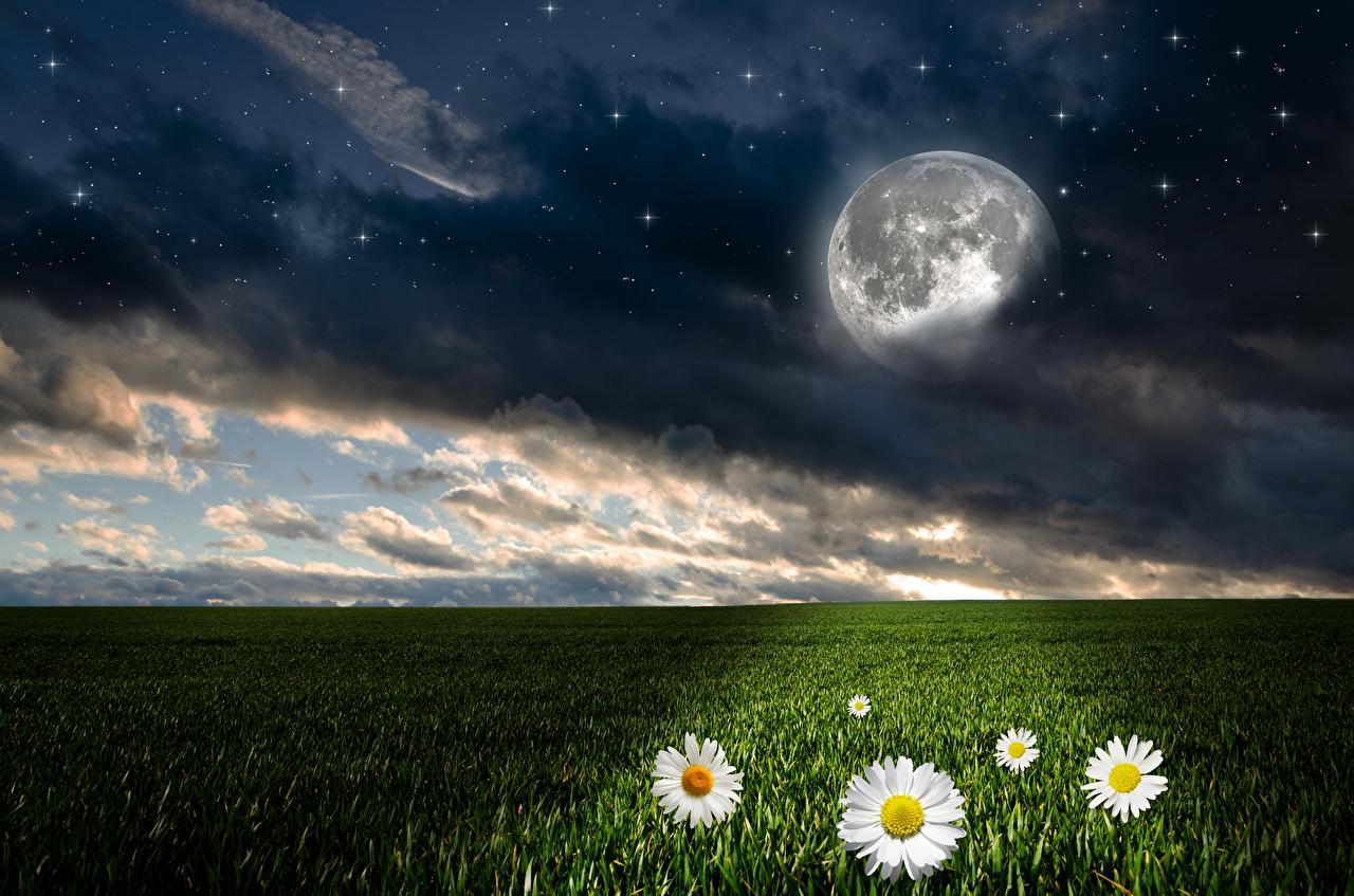 Фотографии Звезды Природа Луна Небо Поля Пейзаж Ромашки Ночь Облака Ночные