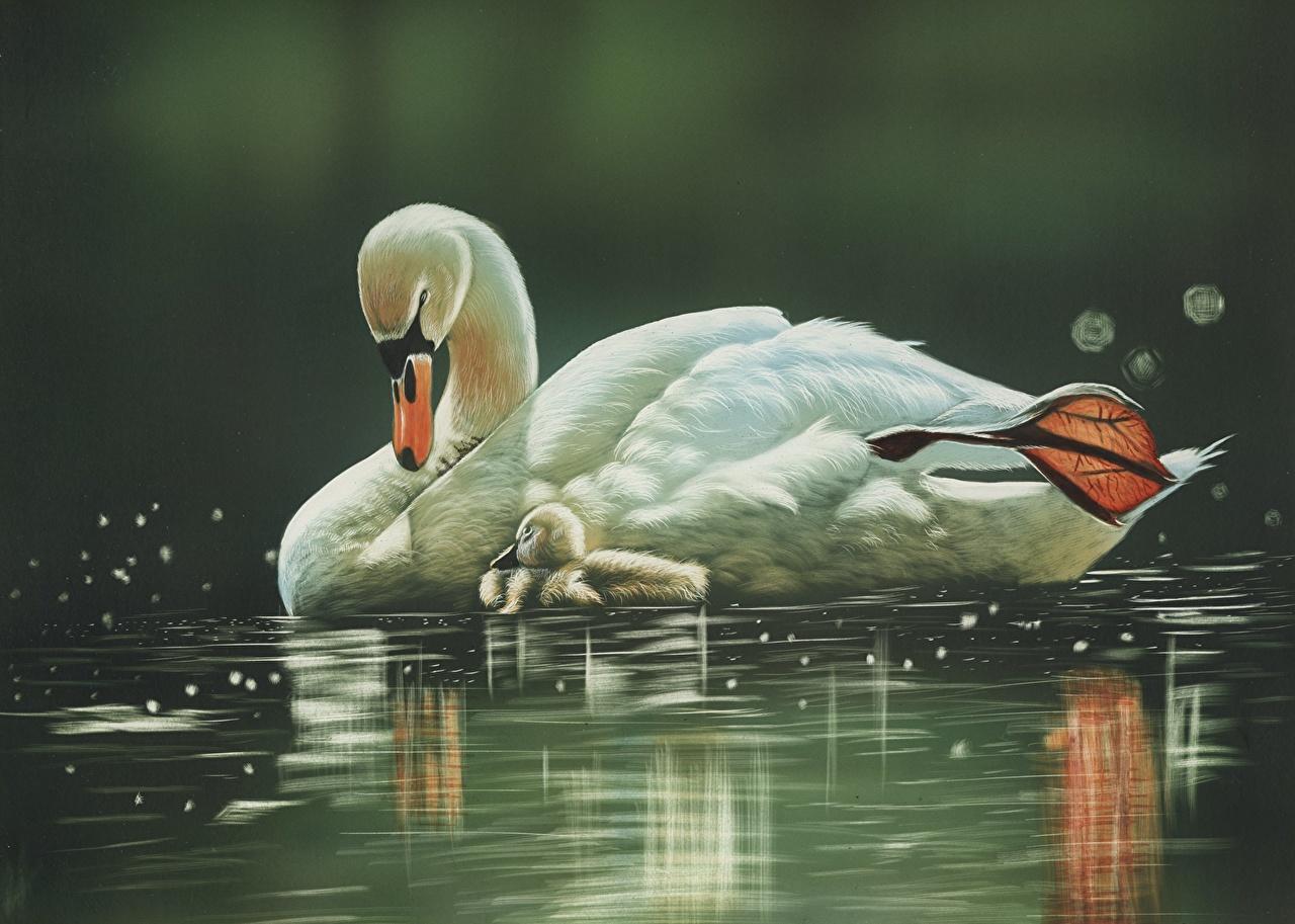 Обои Птицы Лебеди Вода Животные Рисованные
