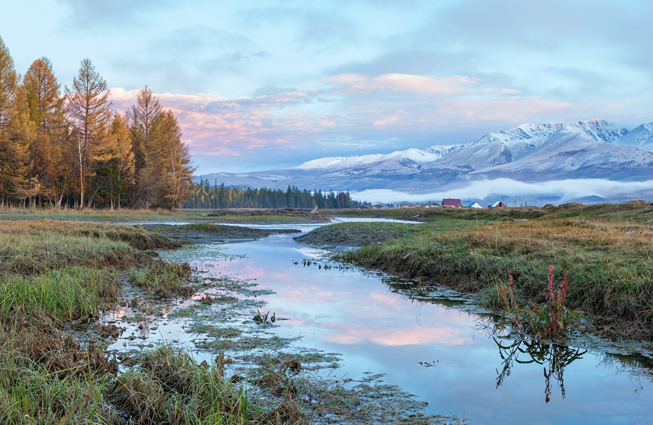 Фотография Россия Altai гора Природа Леса траве Горы лес Трава