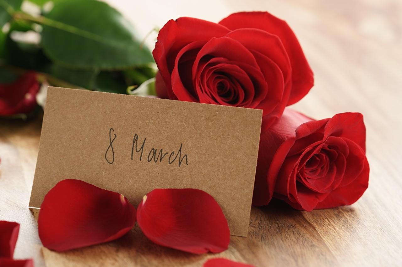 Картинка Международный женский день Английский роза цветок 8 марта инглийские английская Розы Цветы