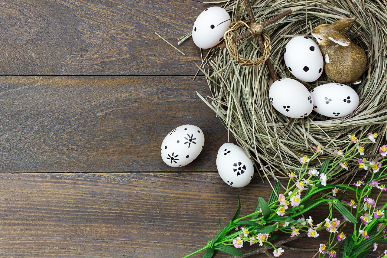 Фото Пасха Яйца Гнездо Шаблон поздравительной открытки Доски яиц яйцо яйцами гнезда гнезде