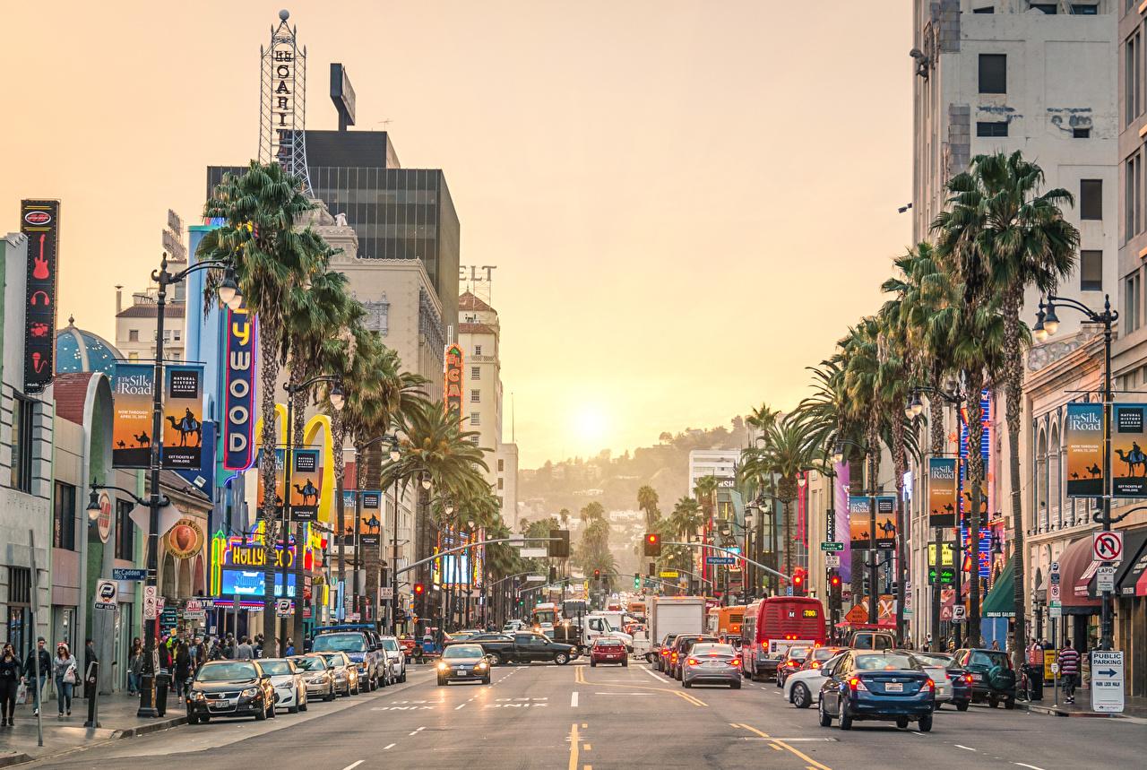 Фотография Калифорния Лос-Анджелес штаты Sunset Street Пальмы Дороги рассвет и закат Уличные фонари Города калифорнии США америка пальм пальма Рассветы и закаты город