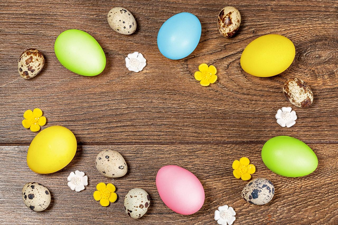 Фото Пасха Разноцветные Яйца Доски яиц яйцо яйцами