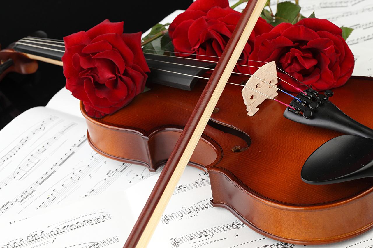 Картинка Скрипки Ноты роза красные цветок втроем скрипка Розы красная Красный красных Цветы три Трое 3