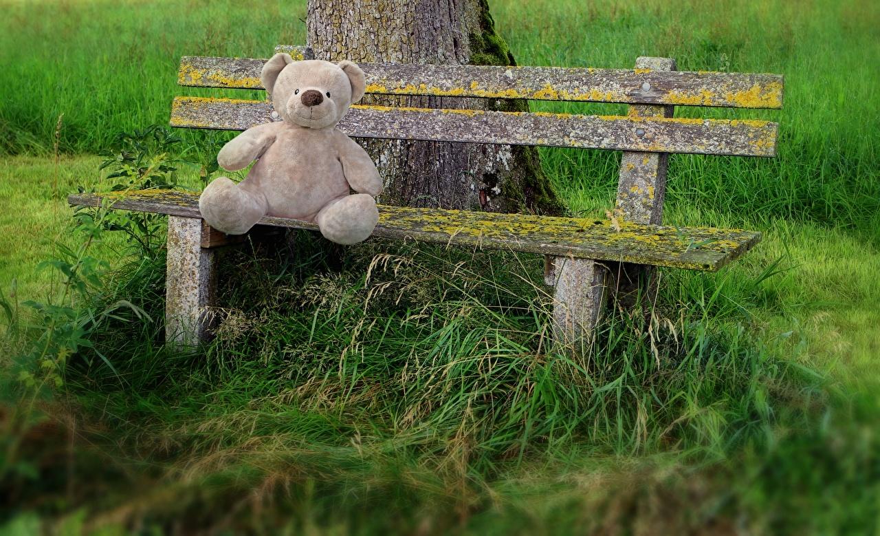 Фотография Плюшевый мишка Трава сидящие Скамейка Мишки сидя Сидит траве Скамья