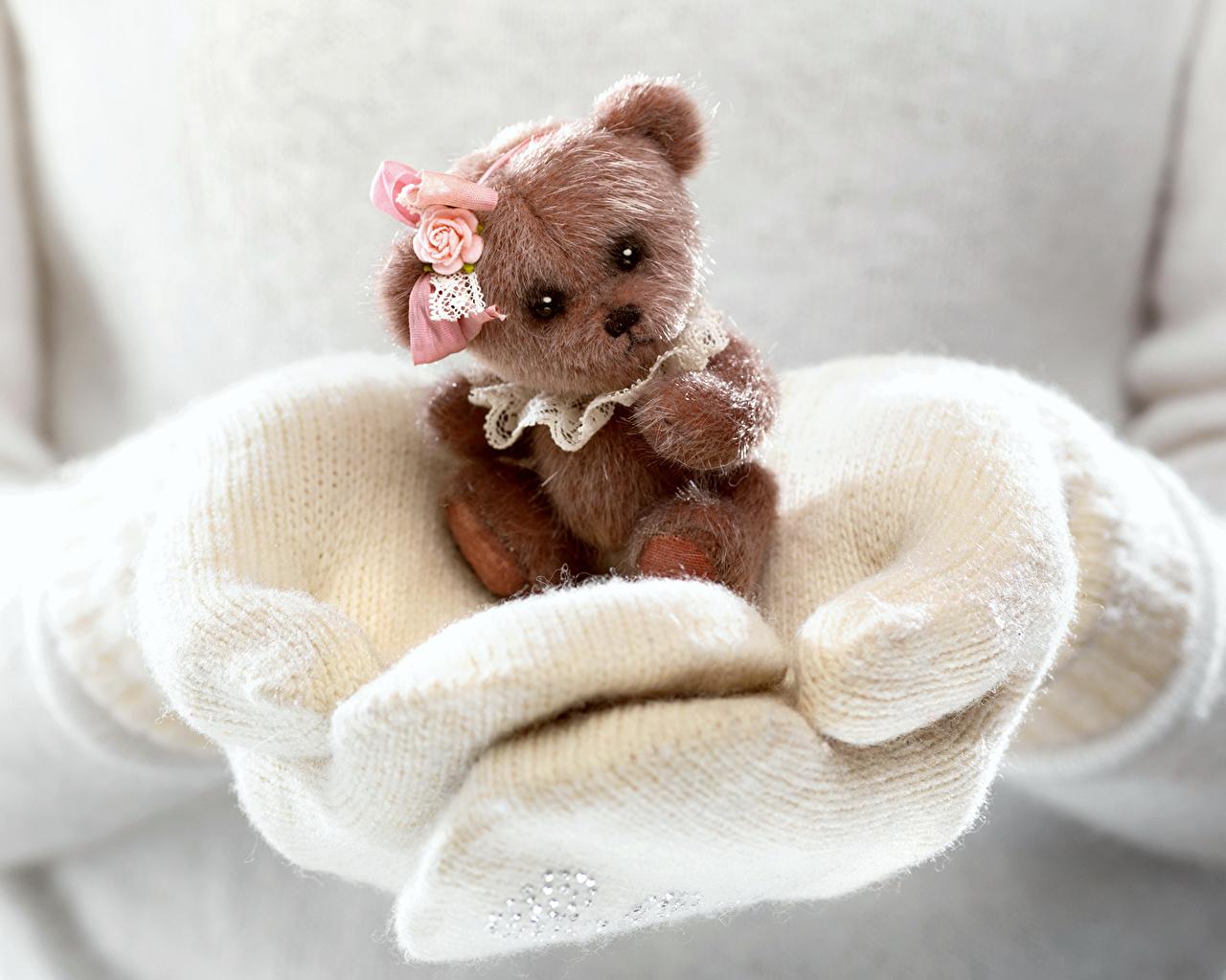 Фотография Мишки Руки Игрушки Плюшевый мишка рука игрушка