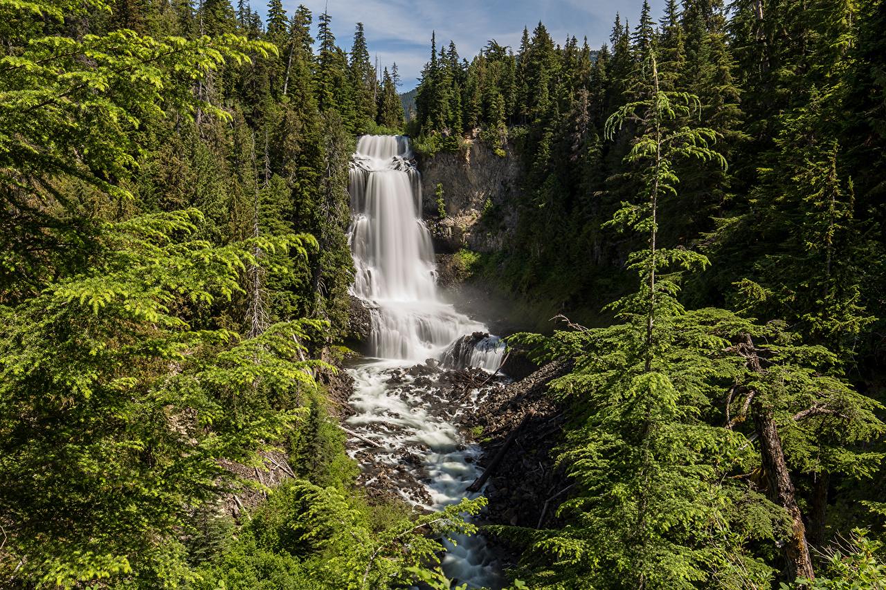 Фотография Канада Alexander Falls ели Скала Природа Водопады лес Ель Утес скале скалы Леса