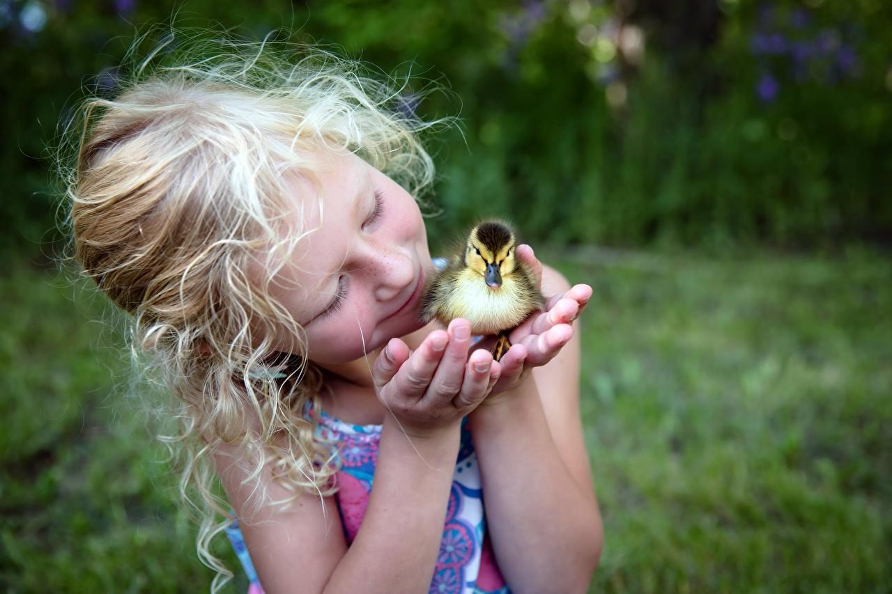 Фото Девочки Утки птица птенец Дети рука девочка утка Птицы Птенцы ребёнок Руки