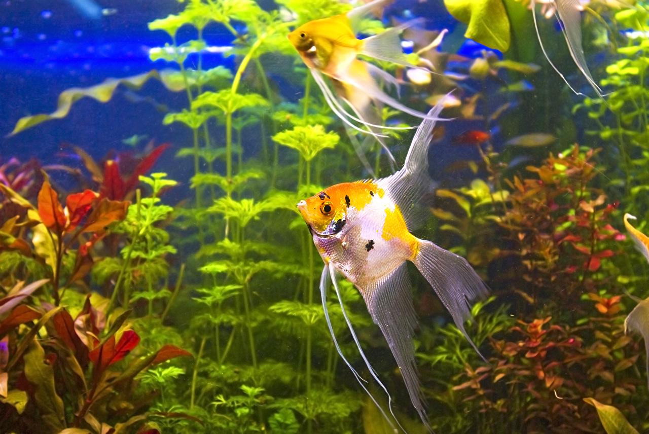 Обои для рабочего стола Рыбы животное Животные