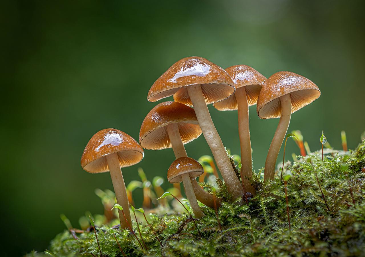 Обои для рабочего стола clustered bonnets Природа Мох Грибы природа Крупным планом мха мхом вблизи