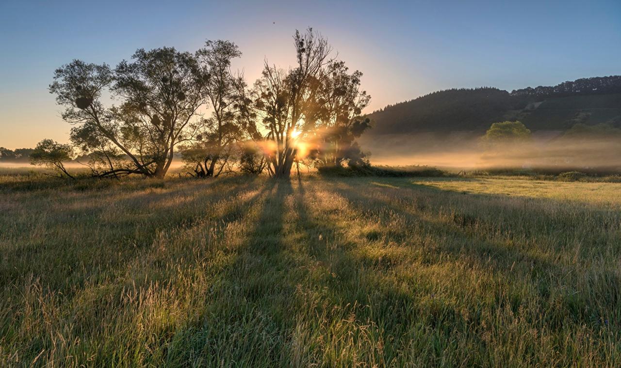 Фото Германия Moselle Valley Природа Утро Поля рассвет и закат дерева Рассветы и закаты дерево Деревья деревьев