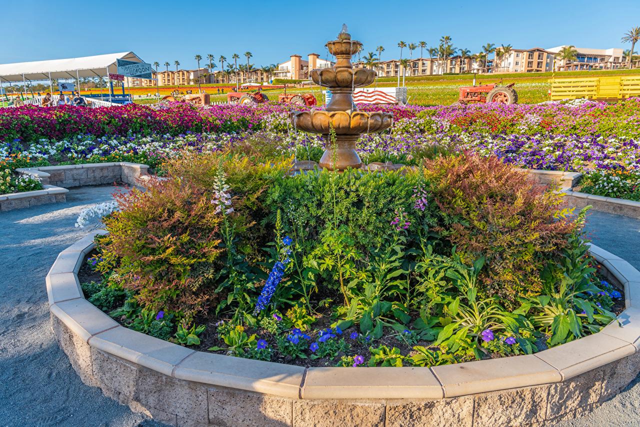 Картинки Калифорния США Фонтаны Carlsbad Природа парк Петунья Кусты калифорнии штаты америка Парки петуния кустов