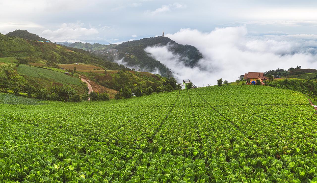 Фото Вьетнам Mu Cang Chai Природа Поля Холмы Пар Дома Здания