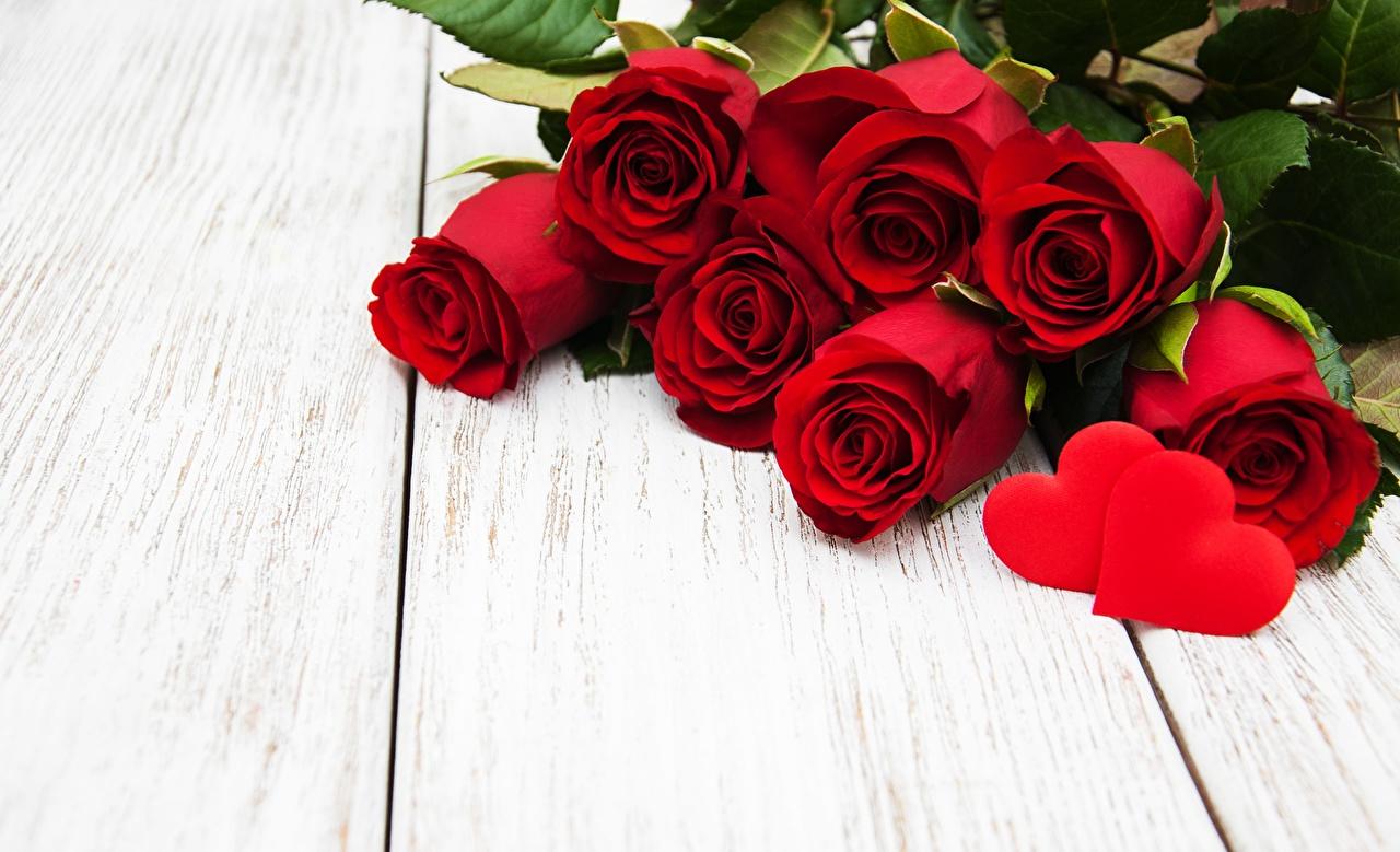 Фотография День всех влюблённых серце красные цветок Шаблон поздравительной открытки Доски День святого Валентина Сердце сердца сердечко красных Красный красная Цветы