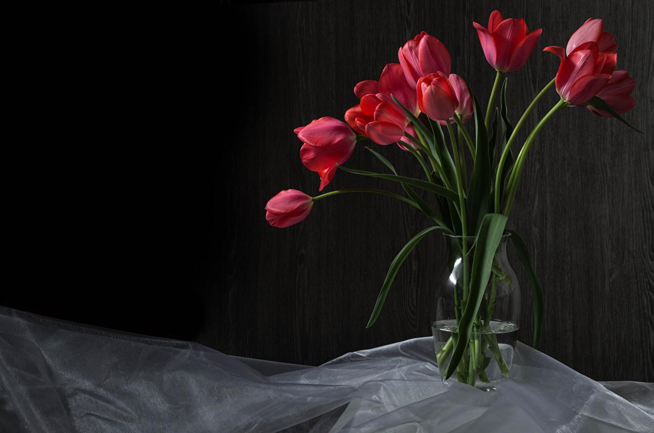 Картинка тюльпан Красный Цветы вазе красные красная красных Тюльпаны цветок Ваза вазы